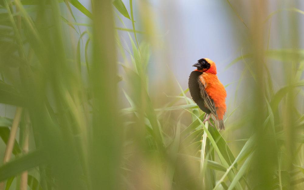 red_bishop_2048.jpg