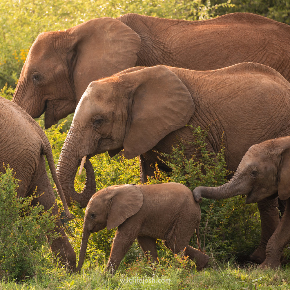 elephant_family_1_2048_wm.jpg