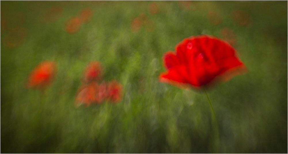 247_Poppy Imressions_Nicky Pascoe  ARPS