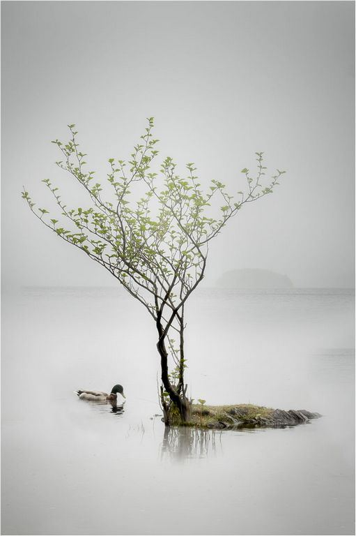 Out of the Mist © Elaine Adkins