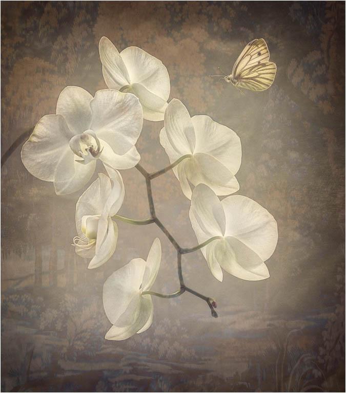 Natural Beauty © Fay Bowles ARPS