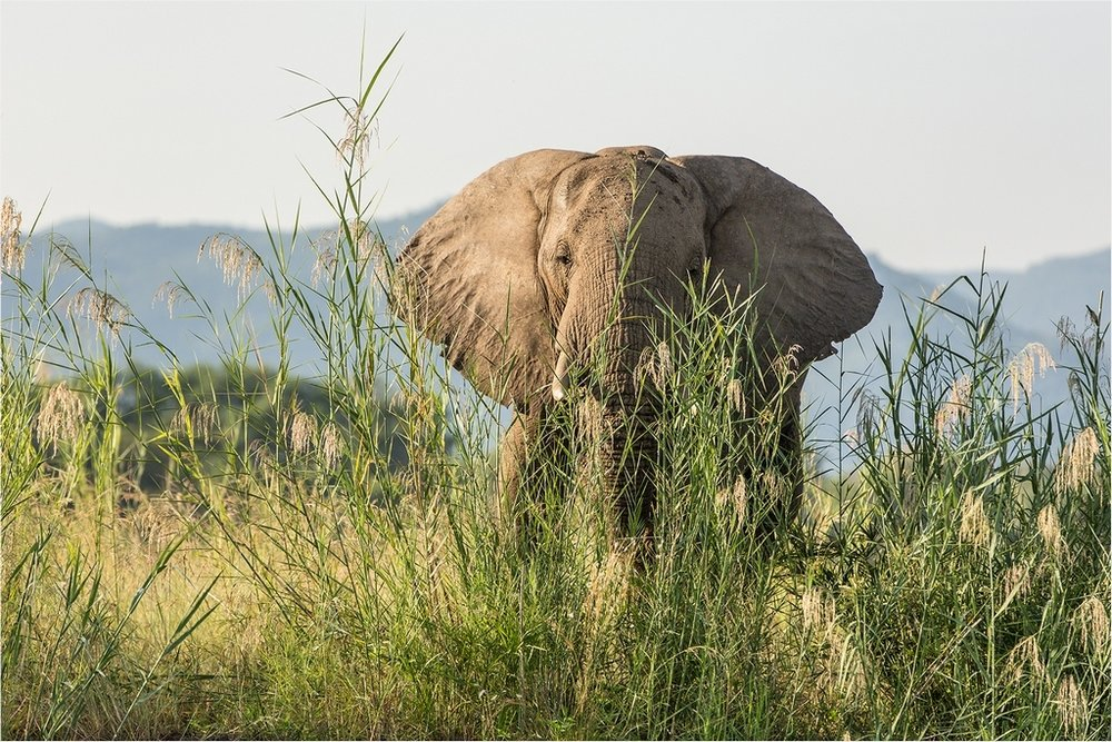 Elephant  Encounter © Ian Francis ARPS DPAGB