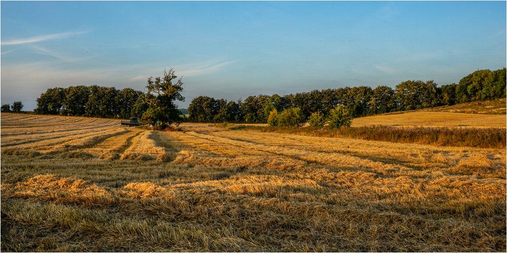 Making Hay © Ann Hart