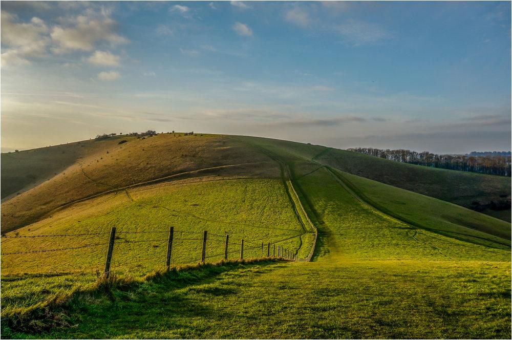 Melbury Hill © Ann Hart