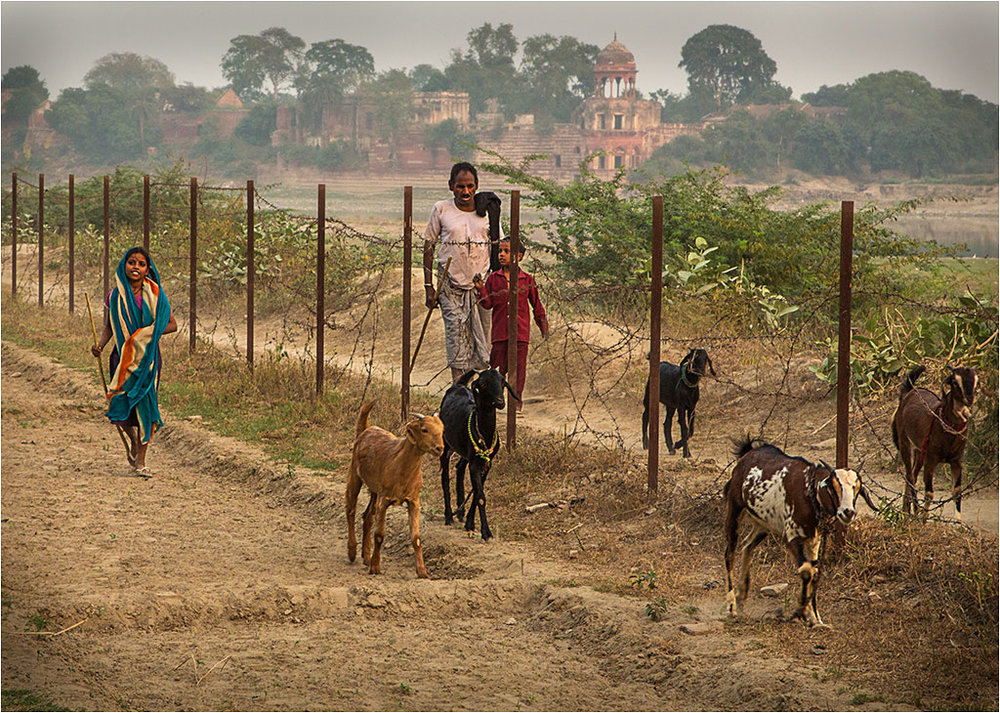THE GOAT HERDER © Ian Francis ARPS DPAGB