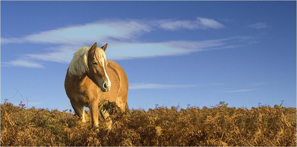 Autumn Pony © Neil Grimshaw