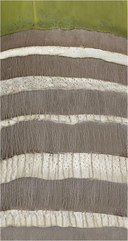 Palm tree bark pattern © Neil Grimshaw