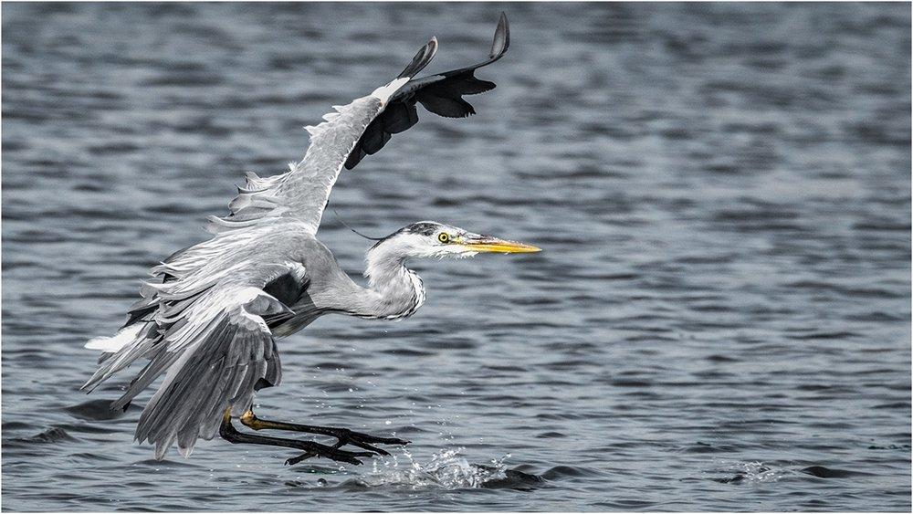 Landing gear Down © Jim Budd