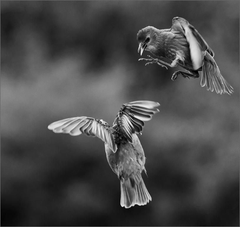 Mid Air Encounter © Karen Coller