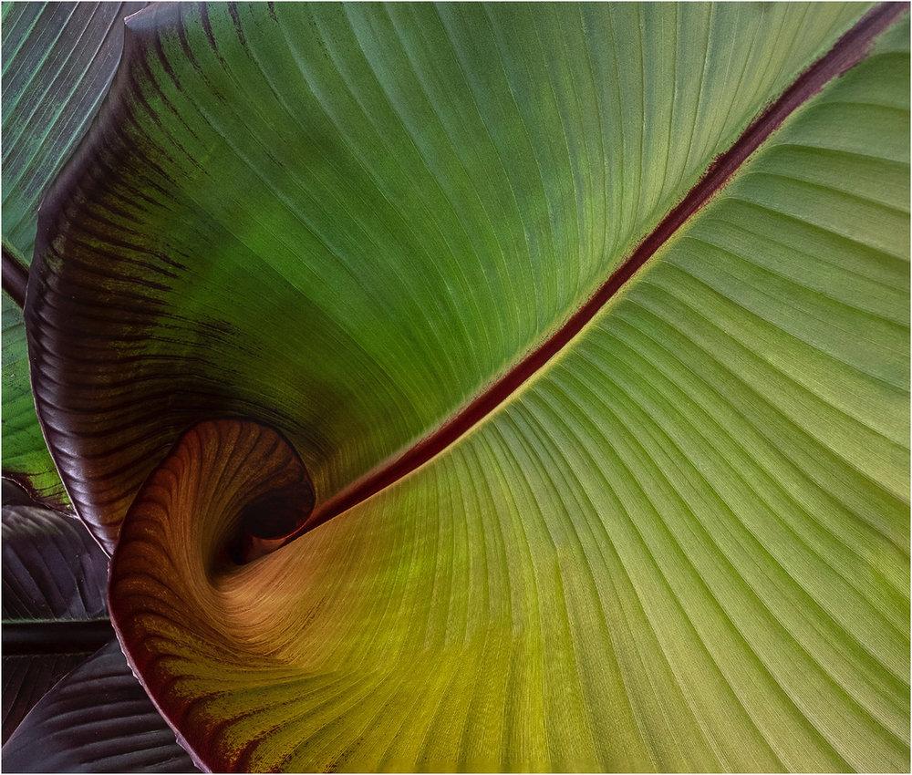 Banana Leaf © John Taylor