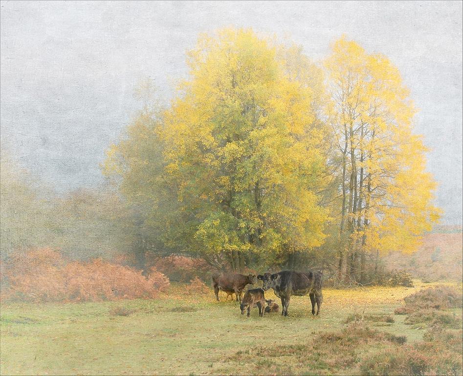 Under the Elms  © Lyn Rendall