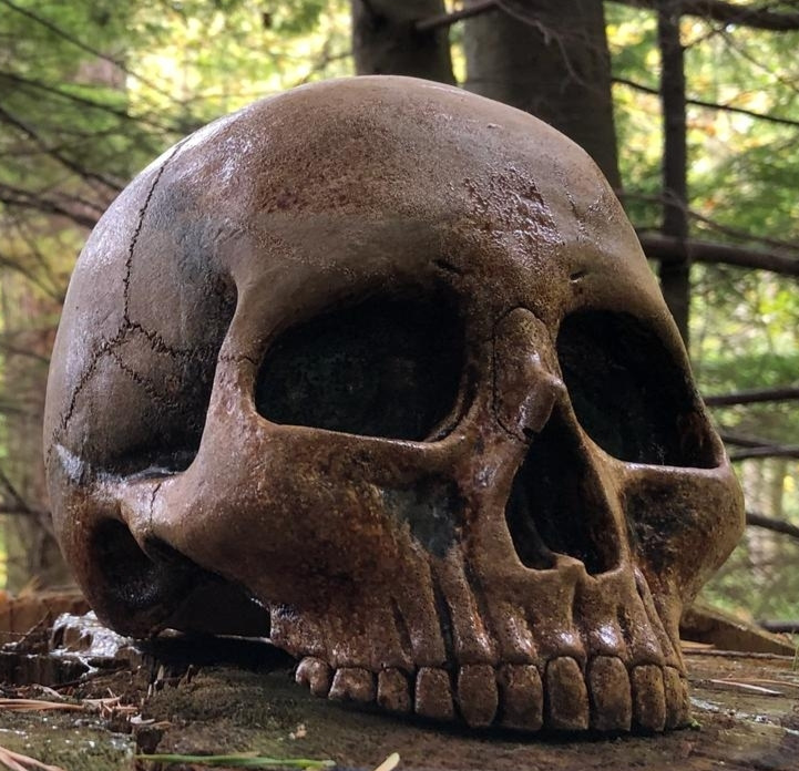 Kerrie Ashworth: Bought a skull from Pigeon creek and am very impressed. Looks very realistic and arrived quickly. Thanks very much, good value and friendly service.