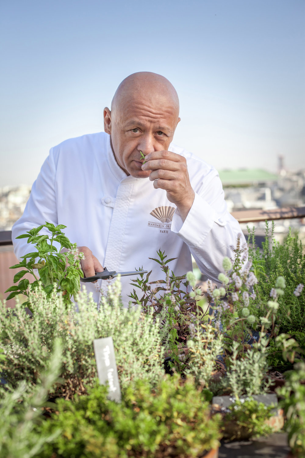 Aromatic Plant Garden / Hotel Mandarin Oriental Paris   Perched on the roof of the Hotel Mandarin Oriental Paris, a new concept with aromatic plants for use by the star chef Thierry Marx was created by the Agency Christophe Gautrand & Associates.