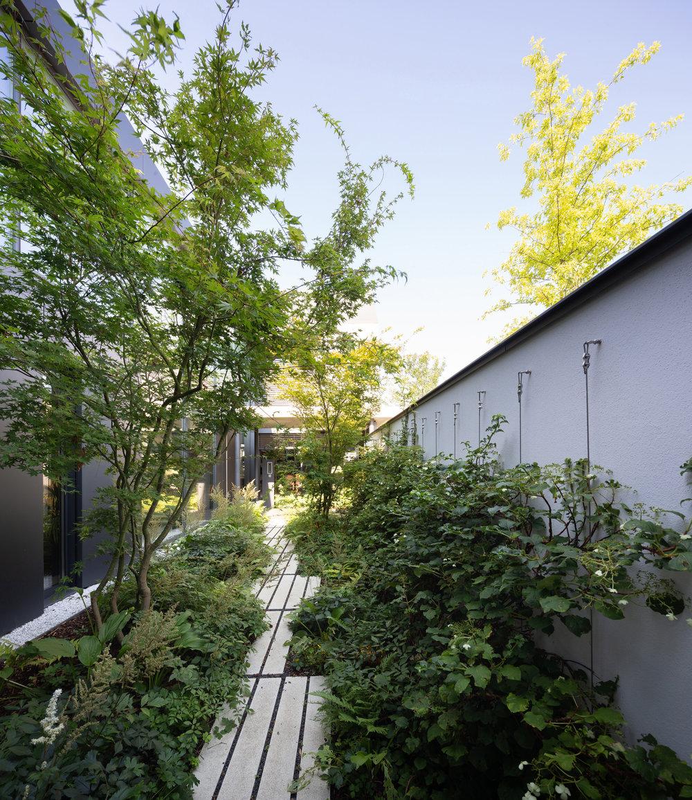 LES ALLEES VEGETALES - Notre travail sur les vues s'articule autour de plusieurs allées constituées de lignes verticales, d'arbres, d'arbustes et de cheminements.Sur les pourtours de la maison nous avons créé des salles de verdure ne permettant plus de discerner le dedans du dehors. Notre aménagement supprime les barrières traditionnelles des espaces intérieurs et extérieurs et laisse le végétal dominer peu à peu l'ensemble architectural.L'ossature du jardin se devine instinctivement grâce aux allées de tilleuls palissés et d'arbustes qui accompagnent le visiteur dans les différentes entités du jardin.