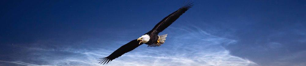 Eagle def 100.jpg