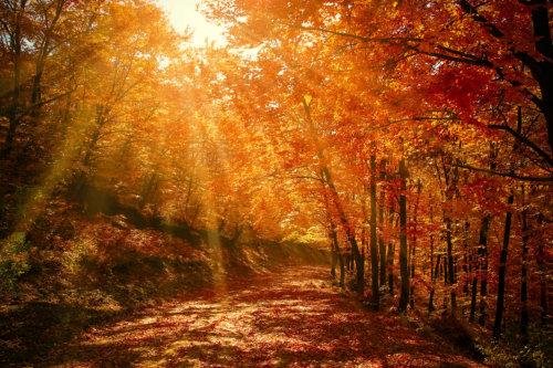 herfstbos satsang 96.jpg