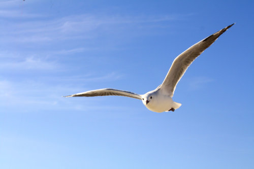Johnathan livingston seagull 96.jpg