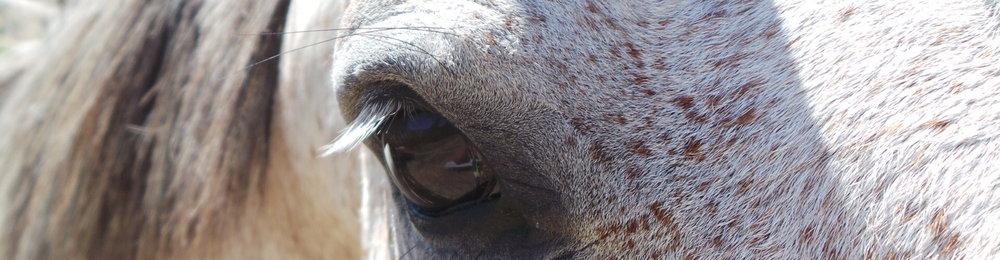 Oog Paardners