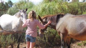 keuze-maken-paardners