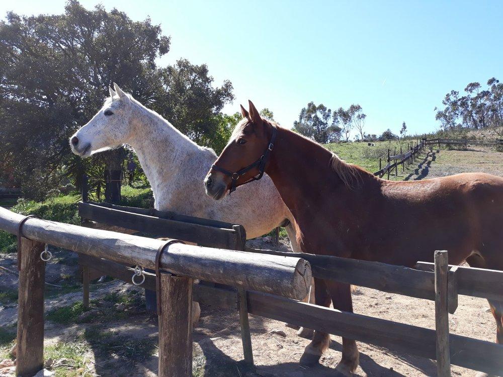 Paarden paardners.jpg