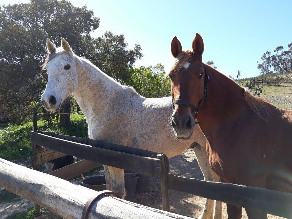 mooi Paardners