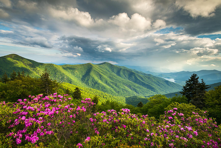 asheville-nc-blue-ridge-parkway-spring-flowers-dave-allen.jpg