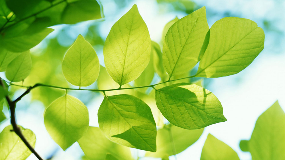 tumblr_static_green_leaves-hd.jpg