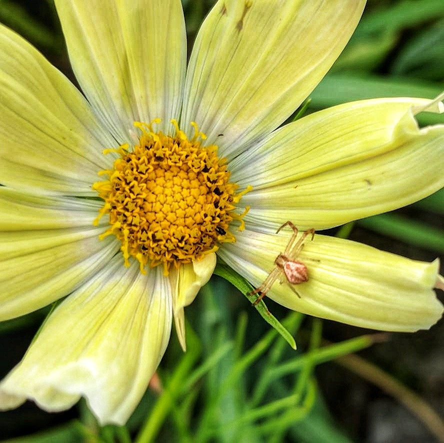View with a Biodynamic Lens - Even the smallest of creatures can make or break a garden!