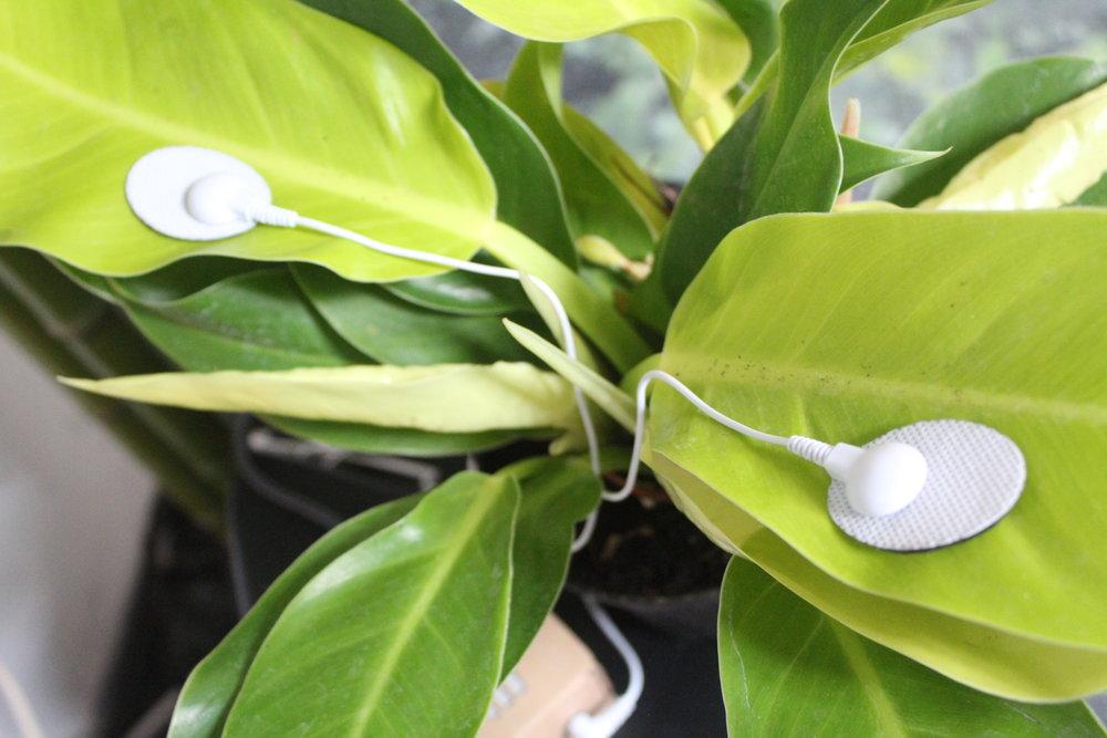 Plants_2.JPG