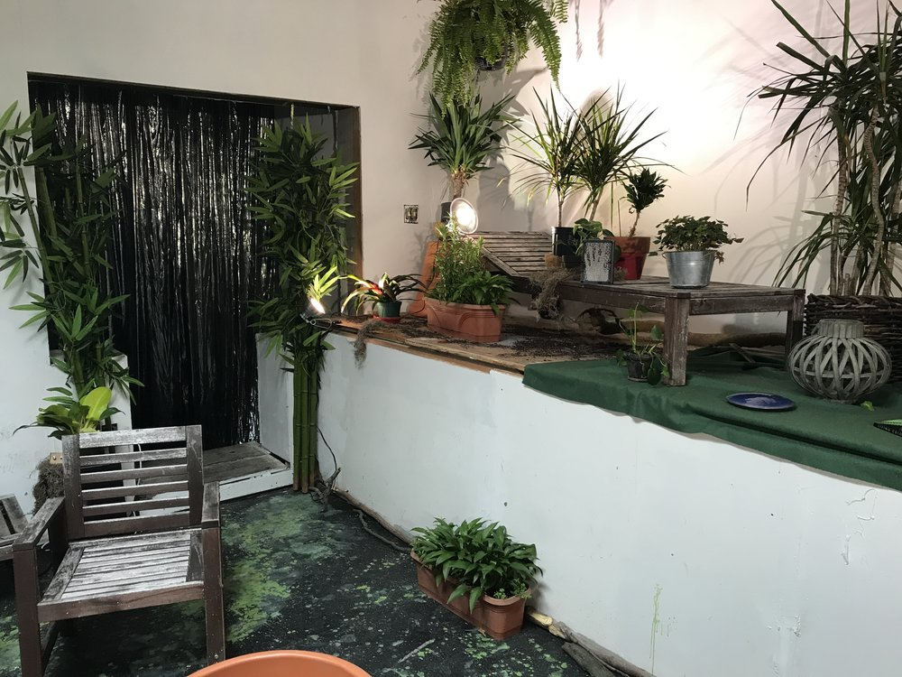 Plants_6.jpg