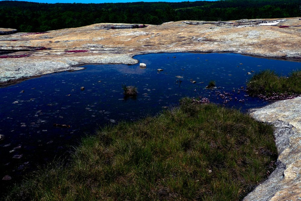 Arabia Mountain (23) - Copy.jpg