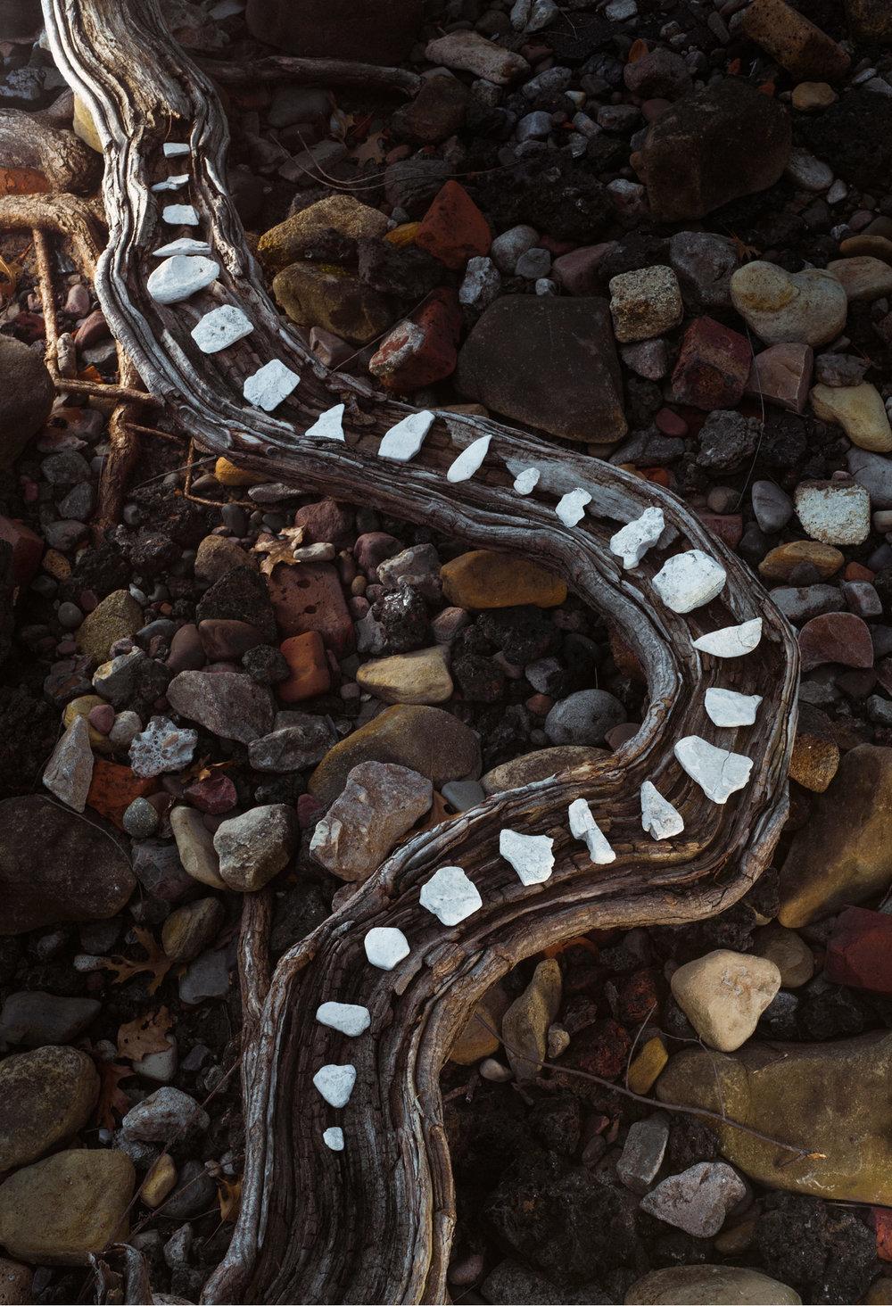 river_snake.jpg