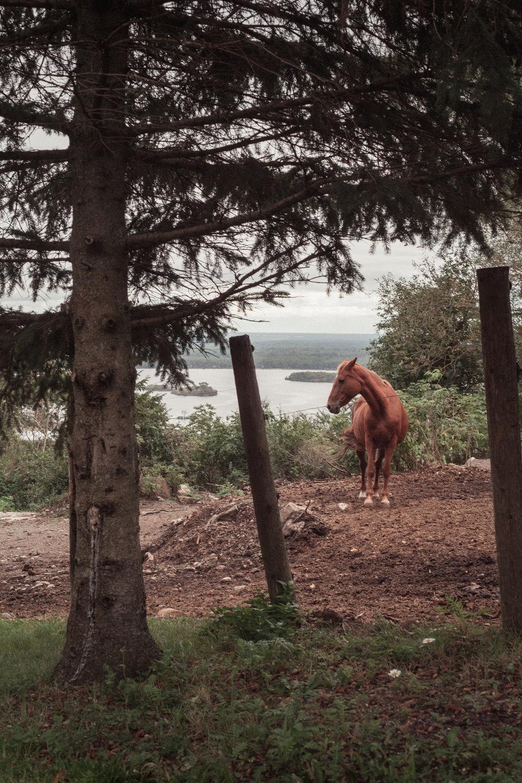 horse_overlooking_stcroix_river.jpg