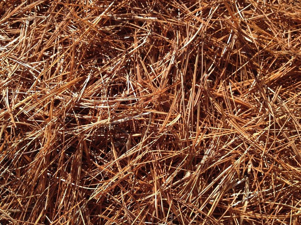 pine-needles-1052194_1920.jpg