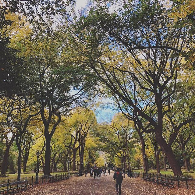 Perfect NYC morning: Stroll through Central Park. Grab coffee at Le Pain Quotidien by the Sheep's Meadow.  Meet some furry friends. Head to Jacobs Pickles for a delicious brunch. @centralparknyc @lepainquotidienusa @jacobspickles #upperwestside #centralpark #dogsofinstagram #brunch #newyorkcity #bypassageco