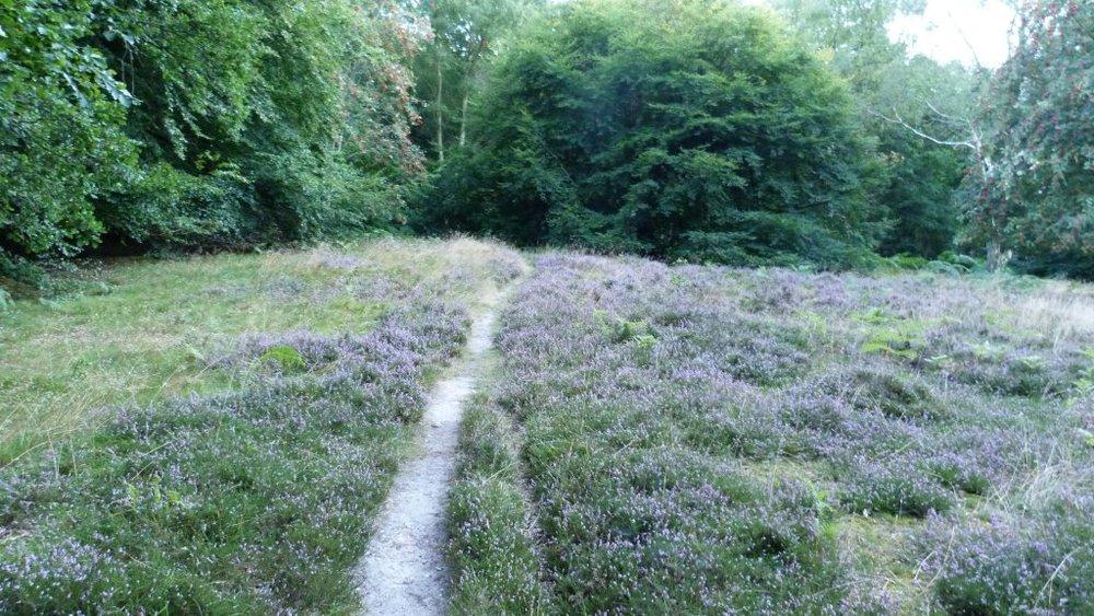 heather path.jpg