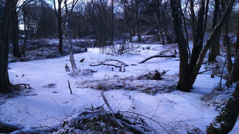 pond in snow.jpg