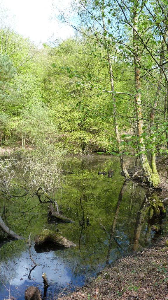 sunny pond portrait.jpg