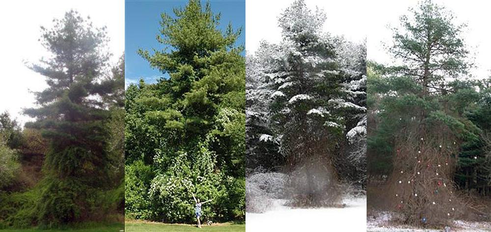 The seasons of Martha
