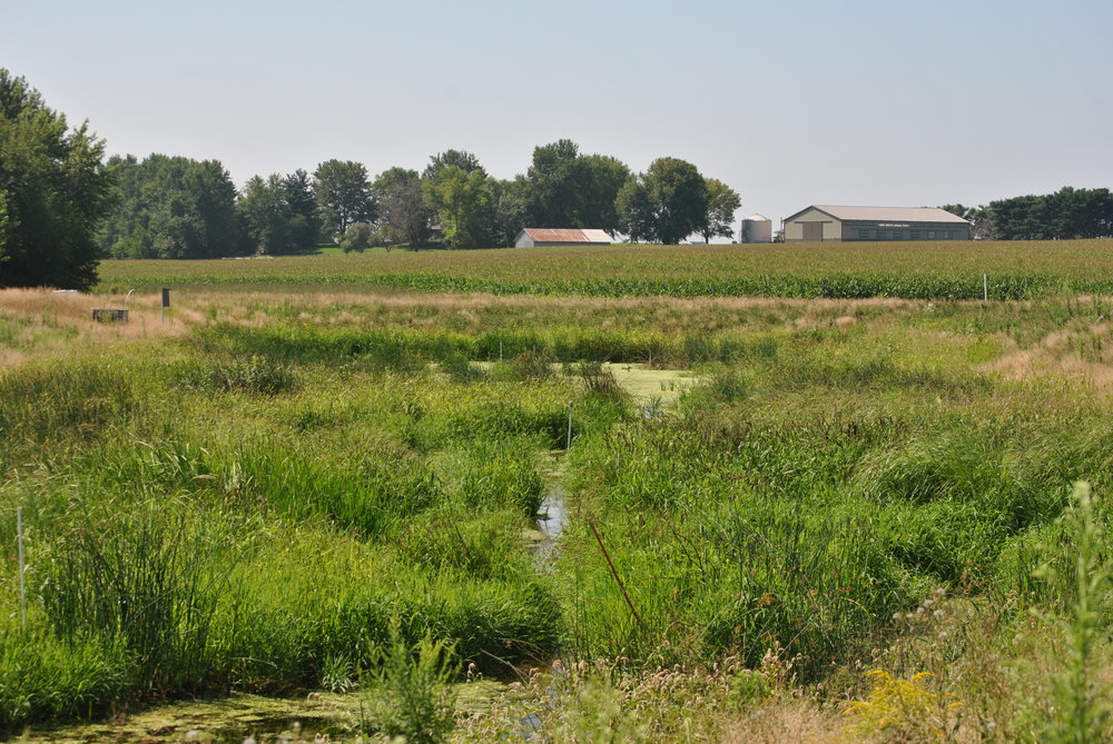 A nutrient reduction solution for tiled cropland. -