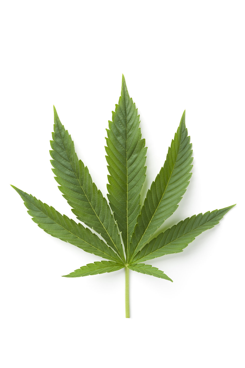 Single Marijuana leaf