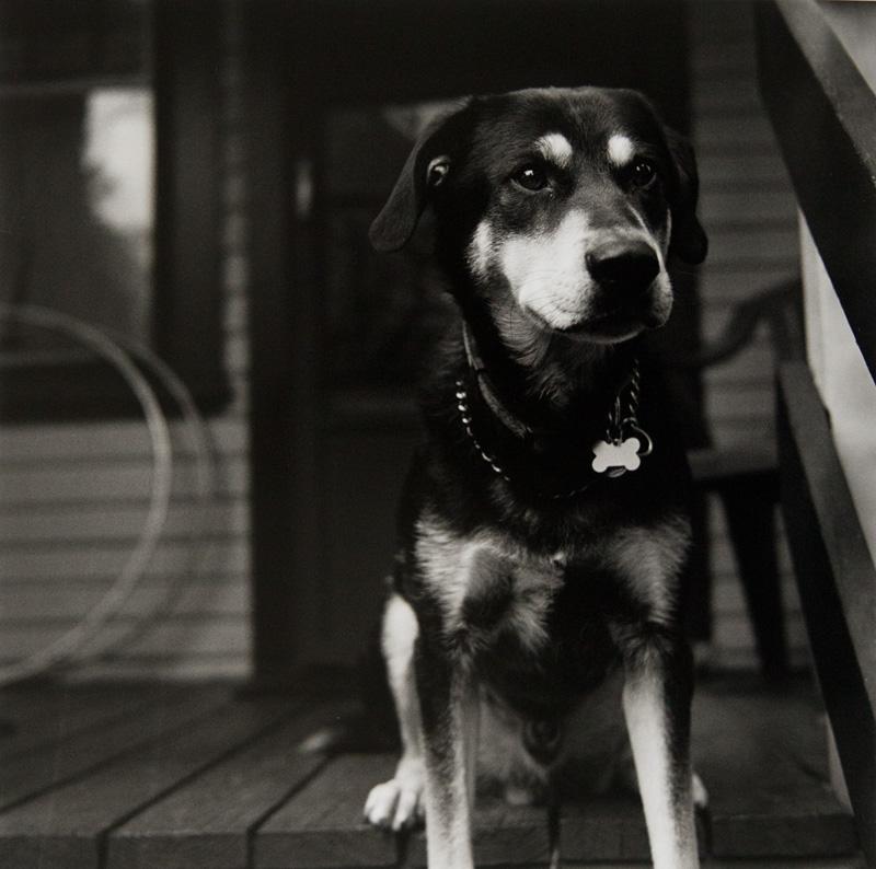 Mastroianni dogs