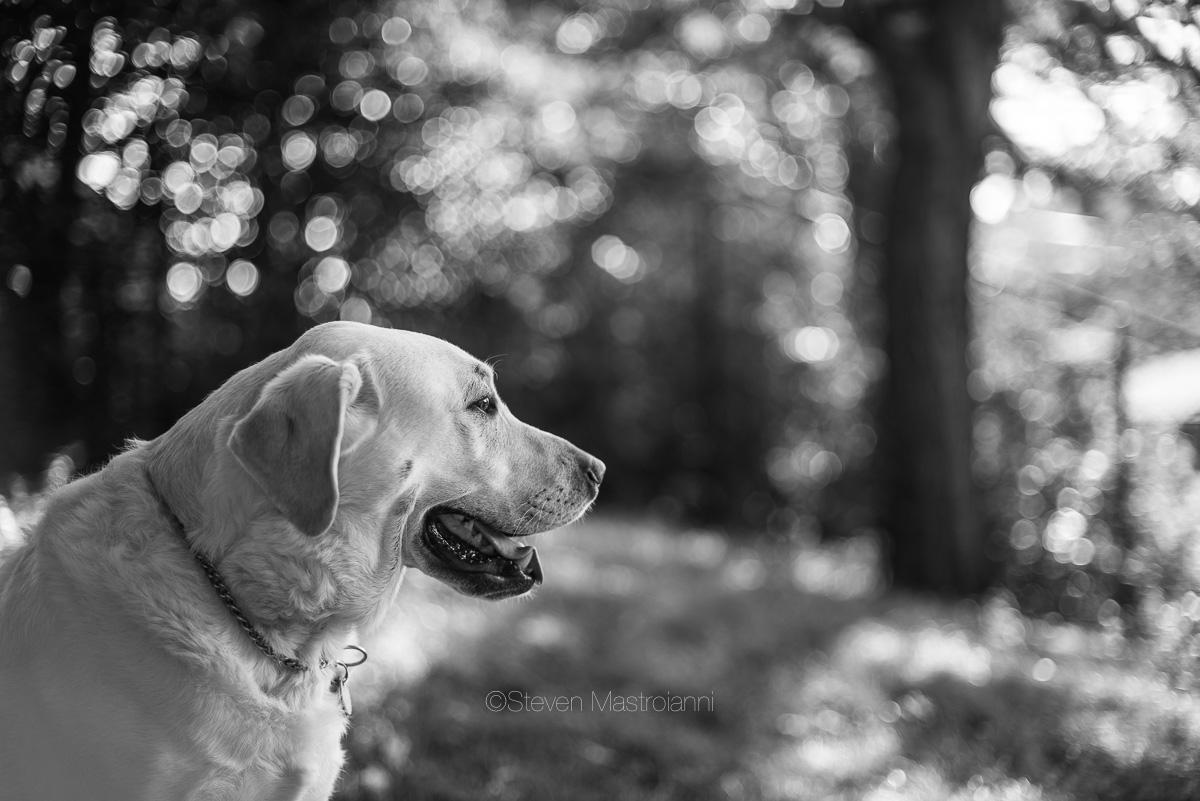 dog-photos-cleveland (7)