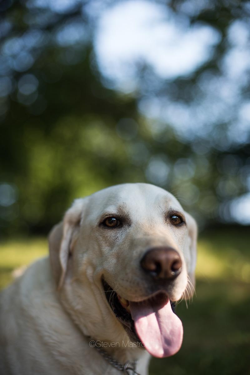 dog-photos-cleveland (6)