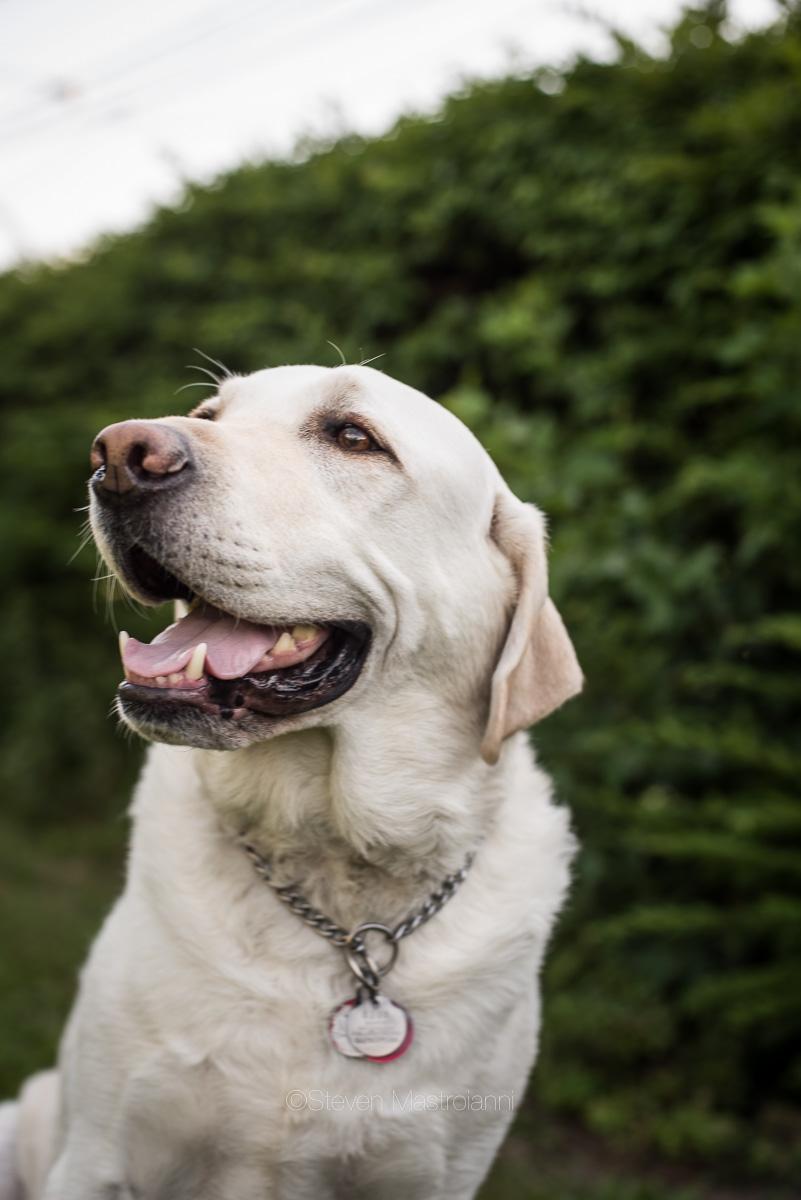 dog-photos-cleveland (4)