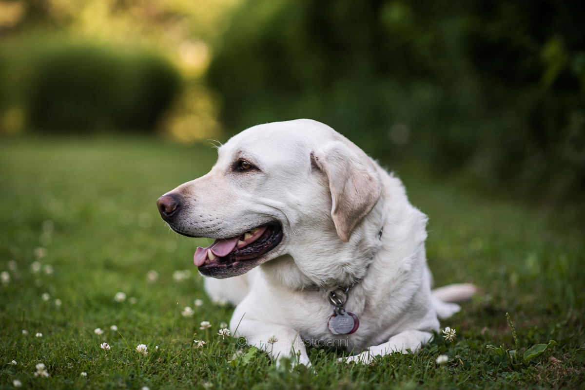dog-photos-cleveland (3)