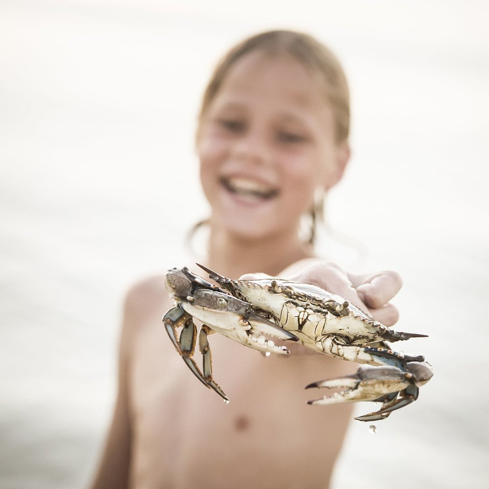Photographer captures portrait of young boy in pensacola beach with crab