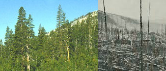 Solastalgia: A forest destroyed by wildfire
