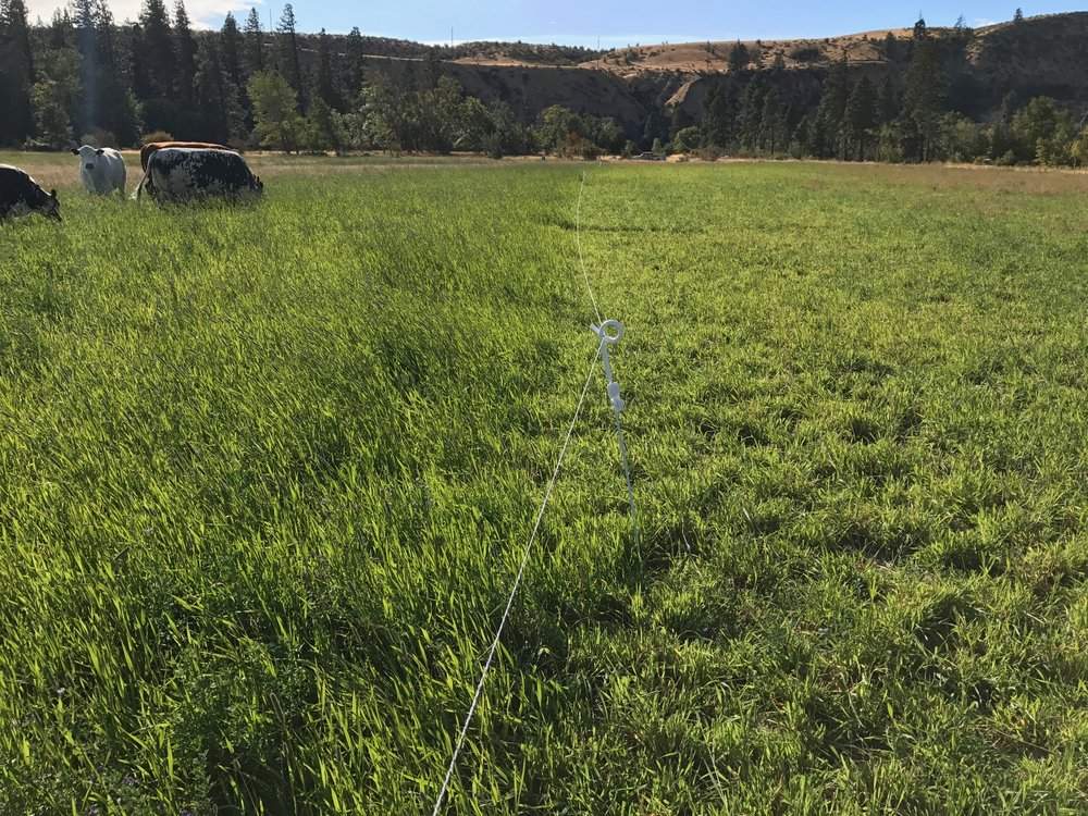 Grass pasture, before and after a couple days of grazing.