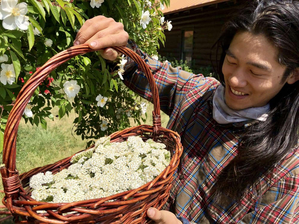 Geoff presenting a basket of fresh yarrow blossoms, beneath approving rose petals.